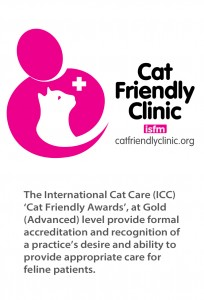 cat-friendly-clinic-page-image-1015
