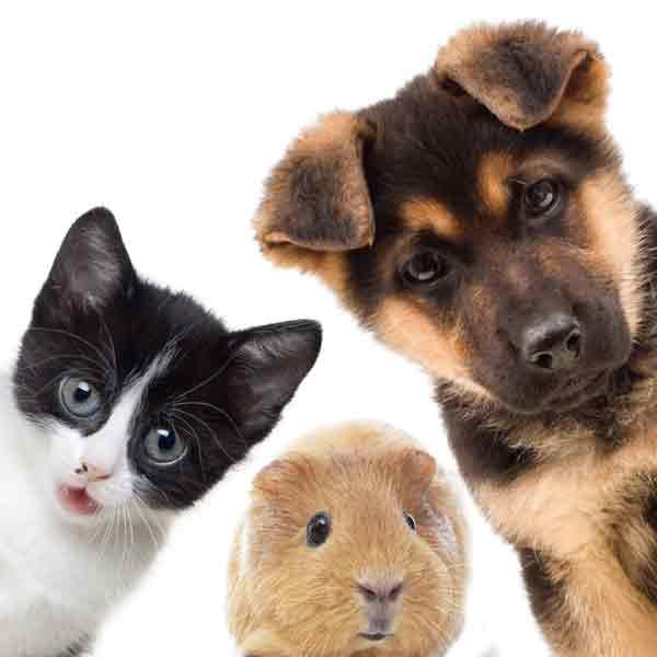 family-pets-square600web