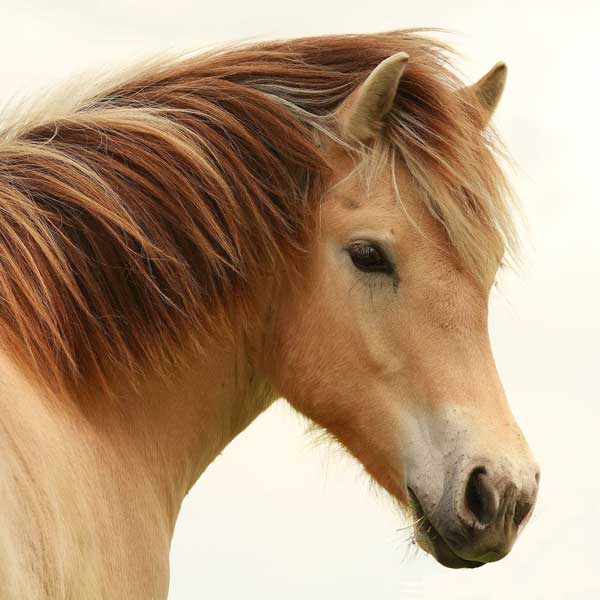 horse-square600web