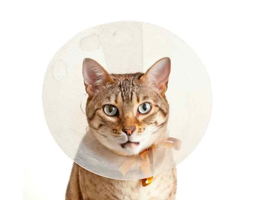 cat-collar-asc-emerg850
