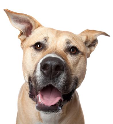 dog-head-trans400web