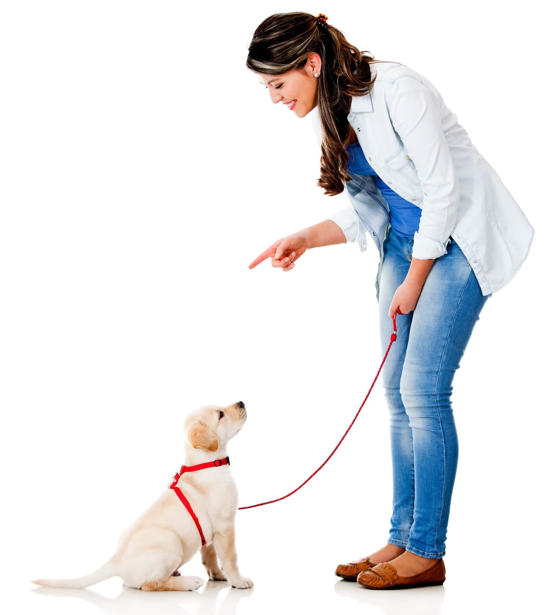 dog-on-lead1920