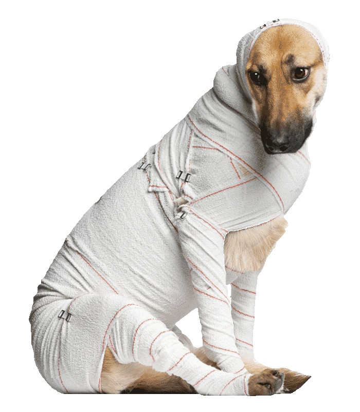 emergency-bandaged-dog700