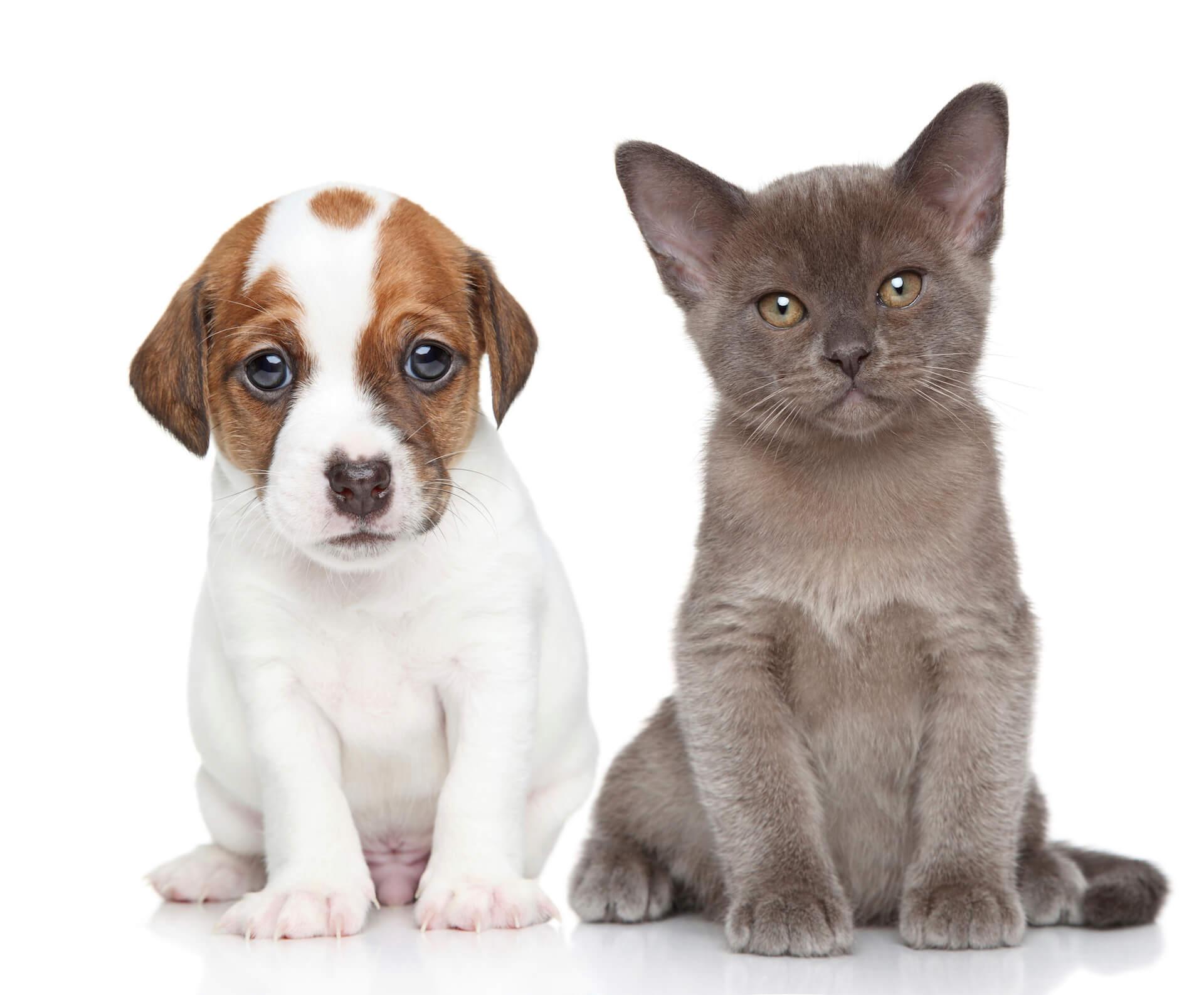 puppy-kitten-4-1920