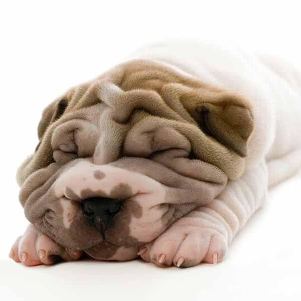 rolly-dog-sleepy-600