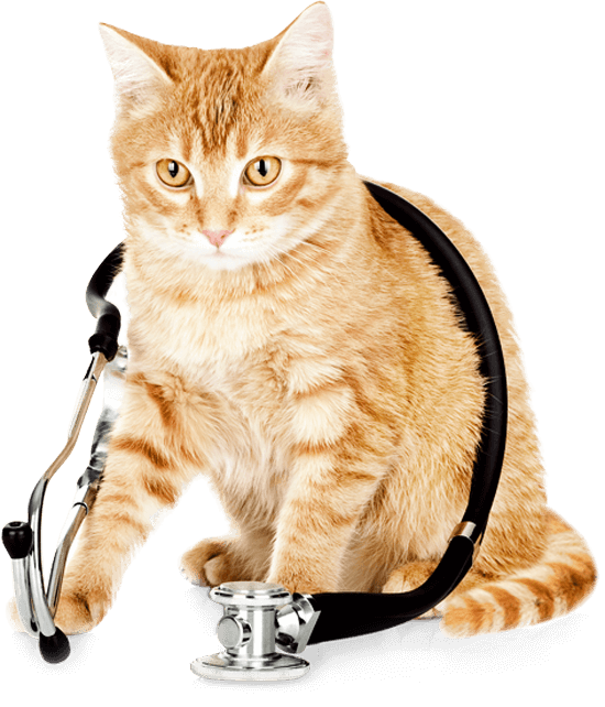 cat-stethascope550png
