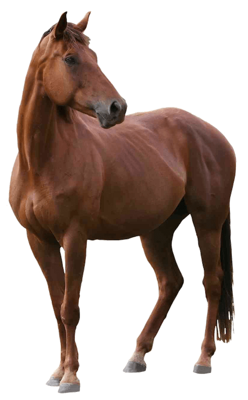 horse-png800h