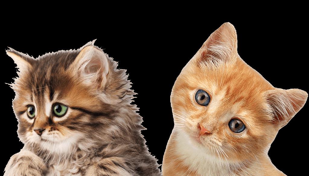 kitten-headshot-1024