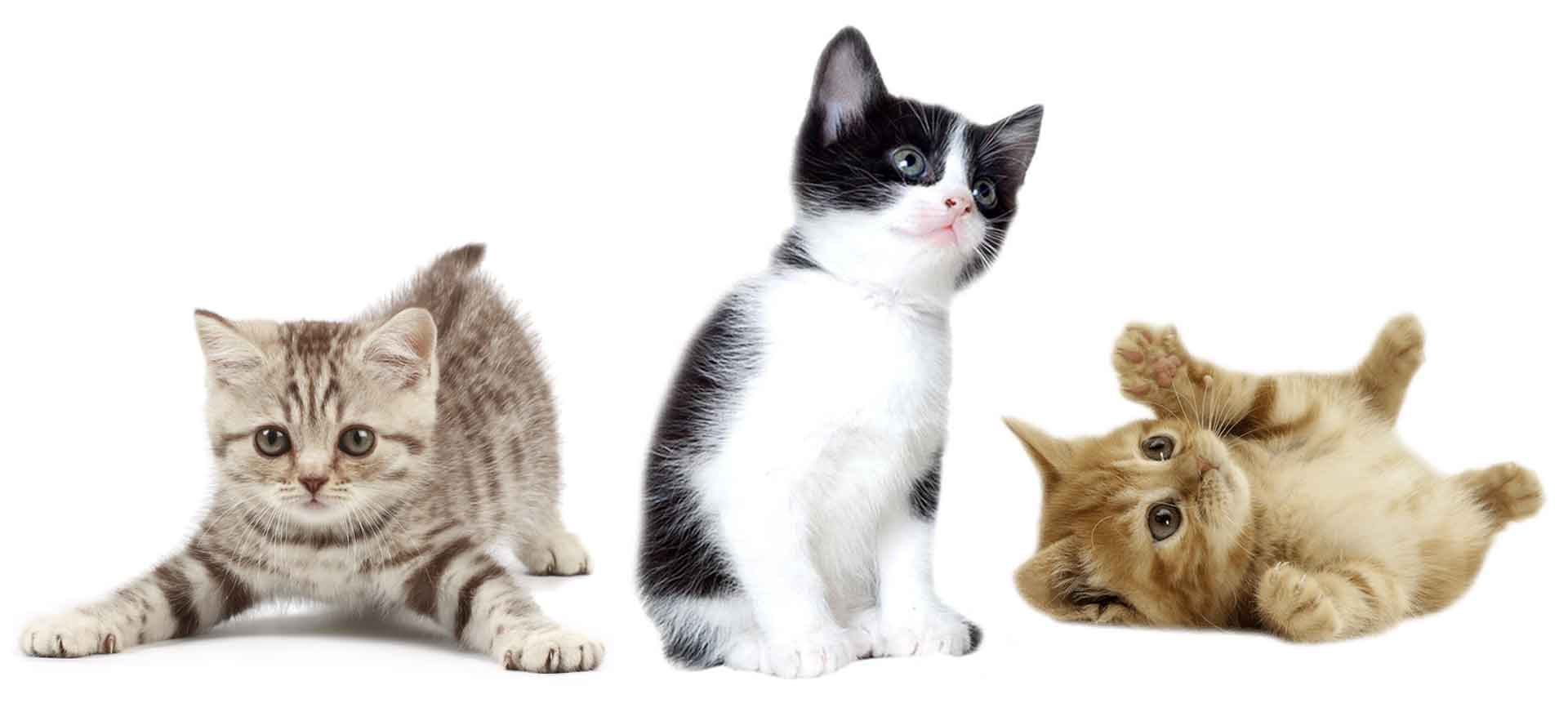 New Kitten Vaccinations & Other Services for WA