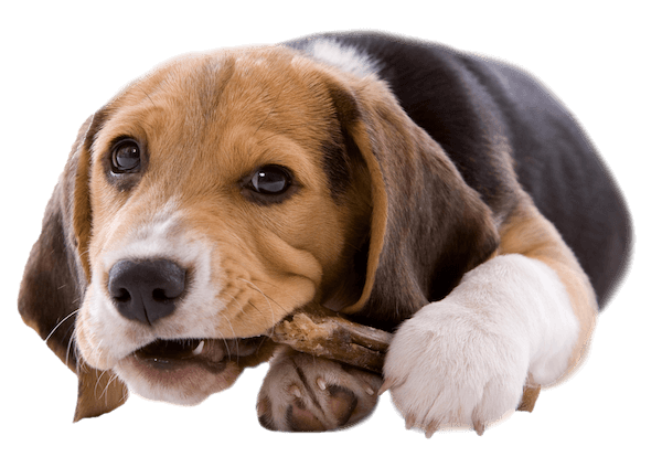 Compassionate care for your pet