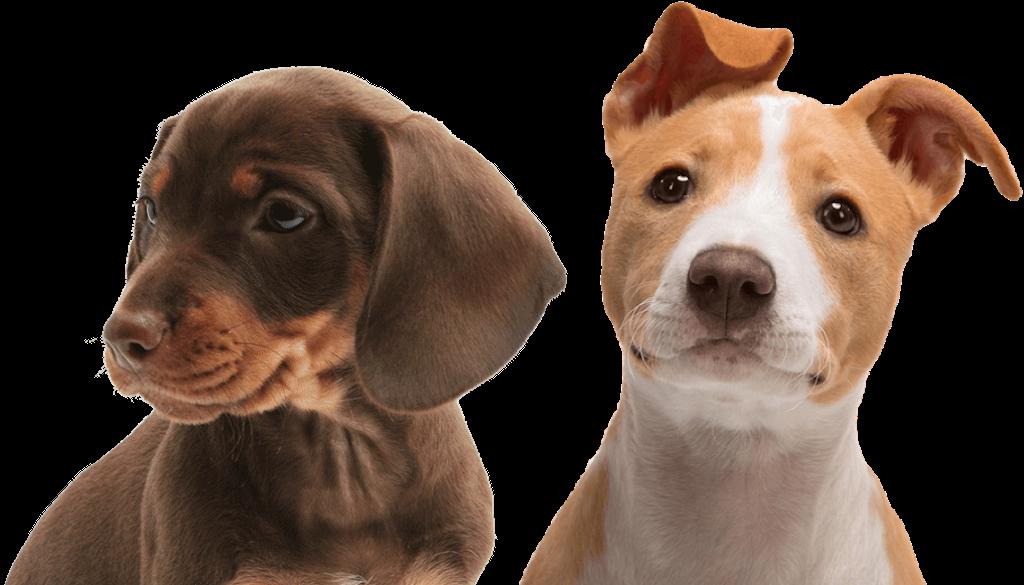 puppy-headshot-1024