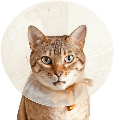 asc-emerg-cat-cone368png