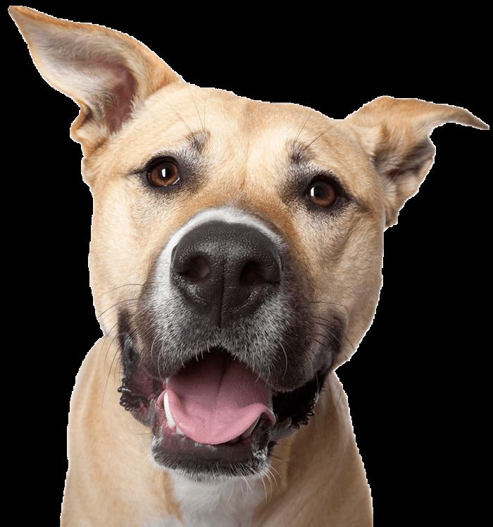 dog-smile600png