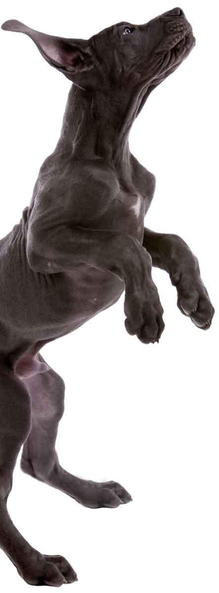 pup-jumping-full-body1200h
