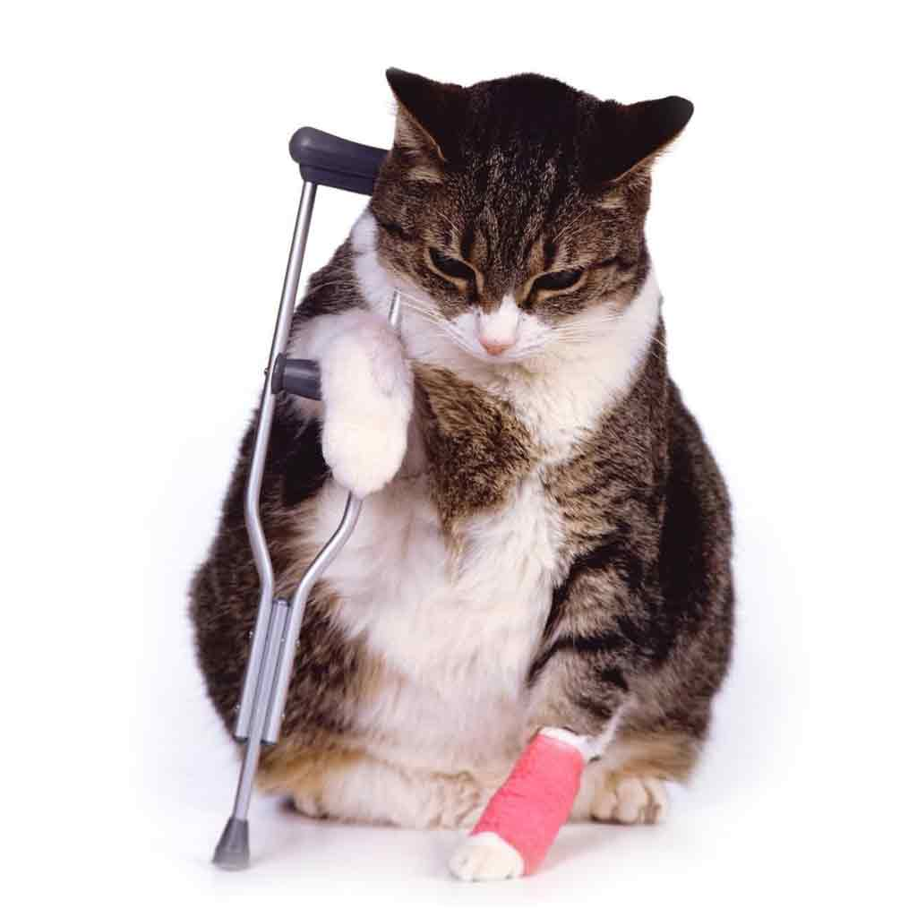 cat_crutches-asc1024sq