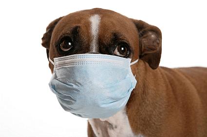 dog-flu425