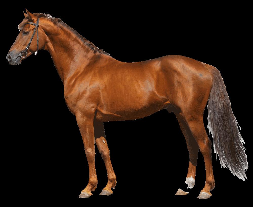 shutterstock_84139573horse