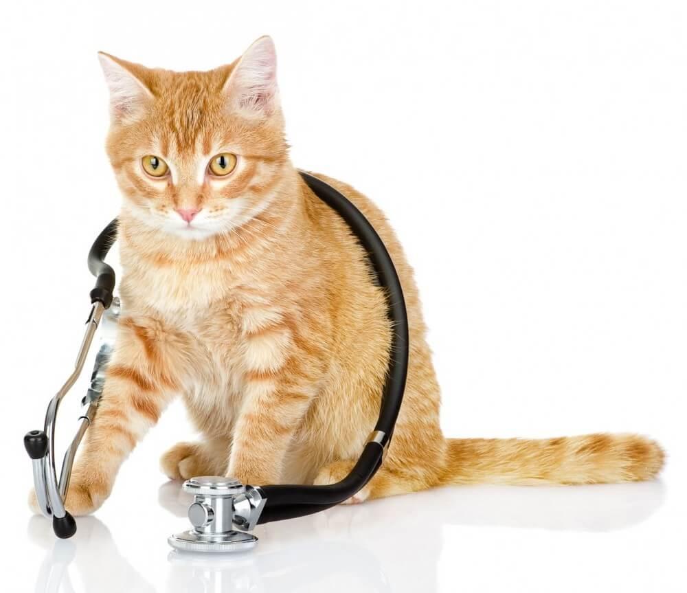 cat-doc1000