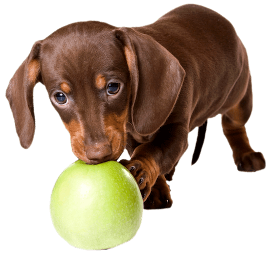 dauch-pup-ball550png
