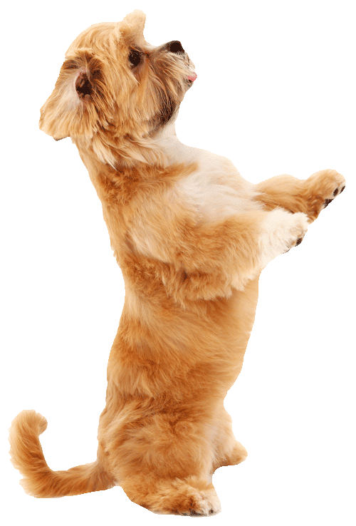 dogtraining500png