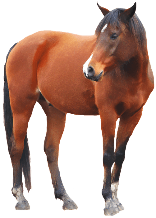 horse-png700h
