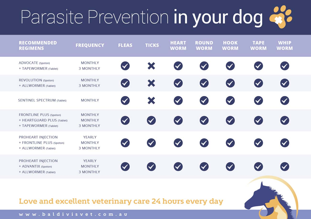 parasite-prevention-in-your-dog1300