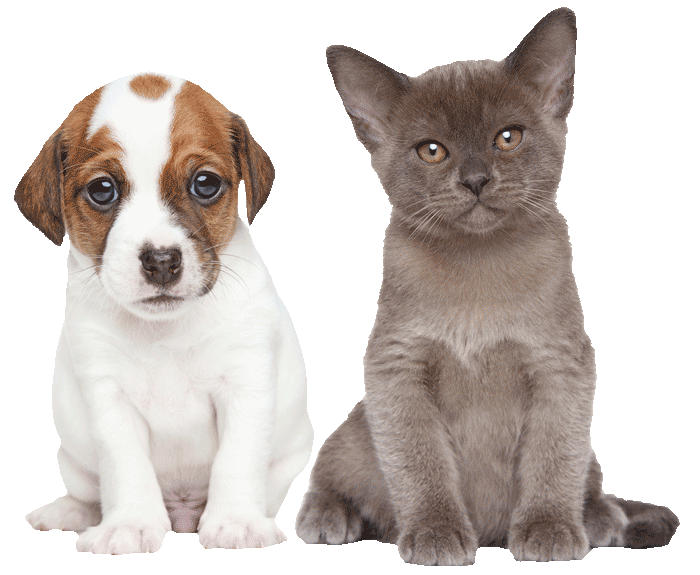 puppy-kitten-700png