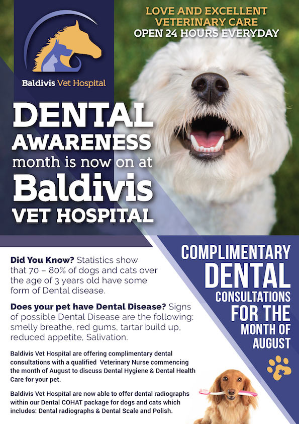 Baldivis Vet Hospital Dental Awareness - Baldivis Vet Hospital